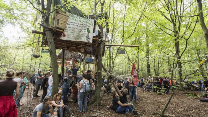 Робингуды Европы_отсрочка_Хамбахский лес